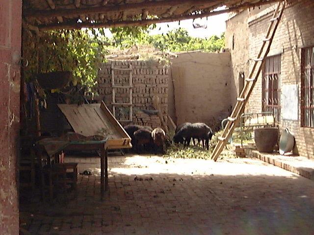 ウイグル族の住居