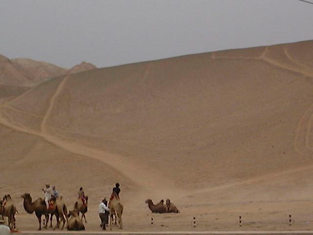 ぼられる駱駝